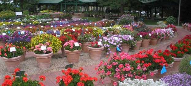 Best Annuals and Perennials for Colorado