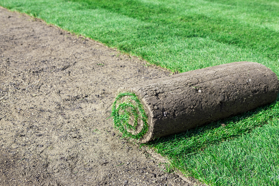 sod and rock